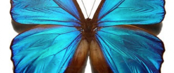Unfolding Butterfly Wings – Does Rebekah Have a Right to Lose Weight?