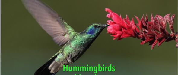 Don't Eat Like a Hummingbird