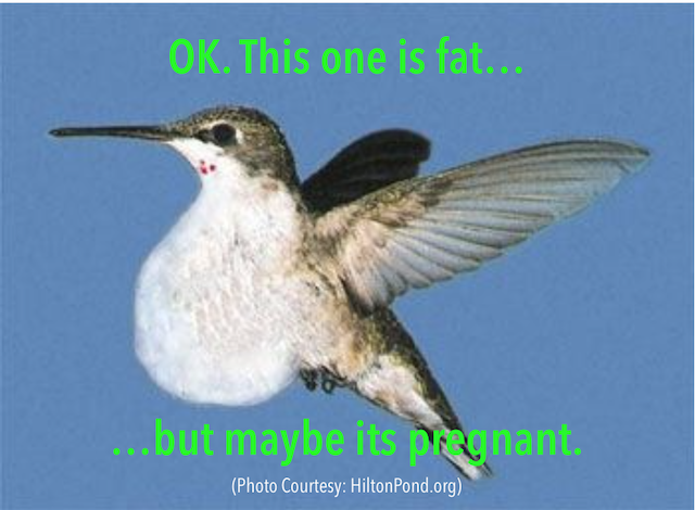 jumming birds Weight loss motivation